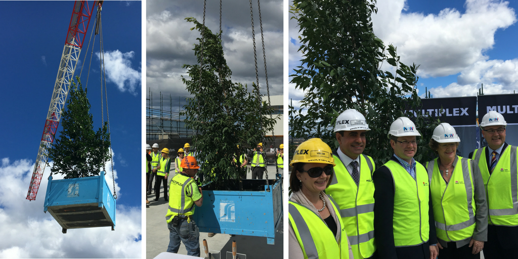 Three images of a lily pily tree being lifted on to the top of the St George Hospital construction to commermorate the acute services building reaching its highest point in construction
