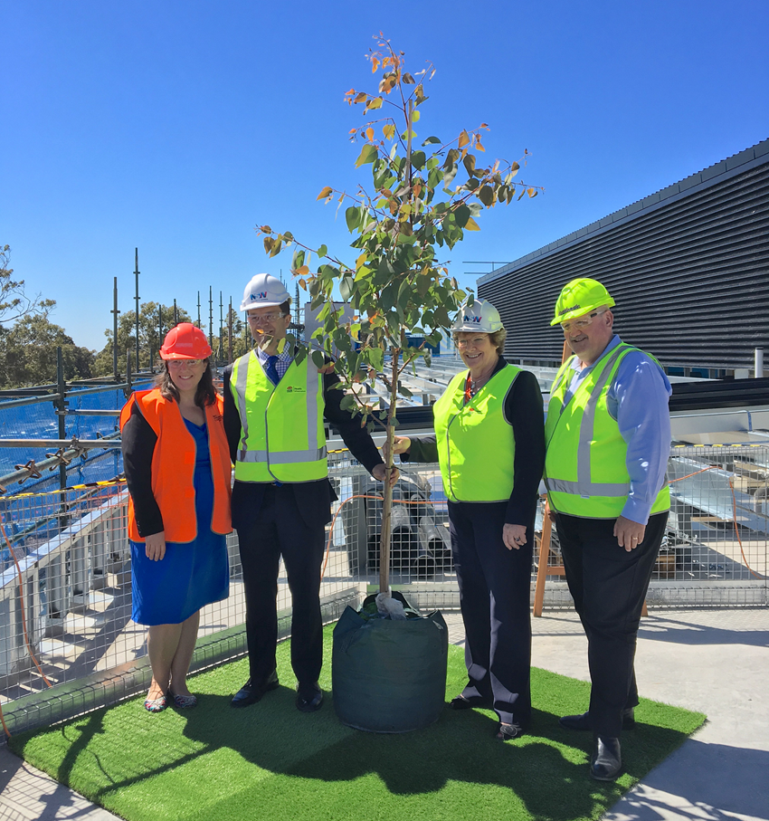 Minister Skinner with Local MPs at the top of the Sutherland Hospital structure standing in front of the native bloodwood tree